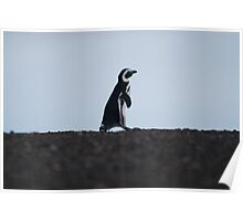 Penguin out for a walk Poster