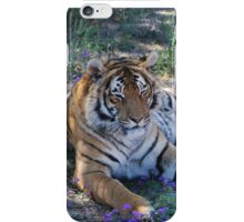 Tiger resting with bluebells iPhone Case/Skin