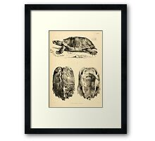 The Reptiles of British India by Albert C L G Gunther 1864 0481 Geormyda Grandis Turtle Framed Print