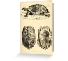 The Reptiles of British India by Albert C L G Gunther 1864 0481 Geormyda Grandis Turtle Greeting Card