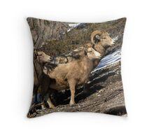 Rams of Banff Throw Pillow