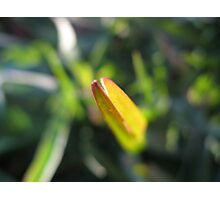 A Single Blade of Grass Photographic Print