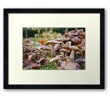Autumn Mushrooms in Yorkshire Framed Print