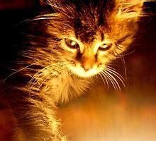 Ozz Kitten  by VampiX