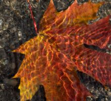 Autumn Colors and Playful Sunlight Patterns - Maple Leaf Sticker