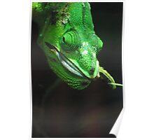 Chameleon Chomp Poster
