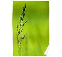 I Know Why The Grass Is Green Poster