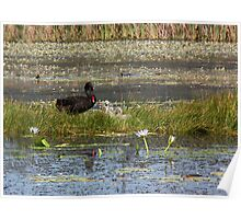 New signets in the Wetlands Poster