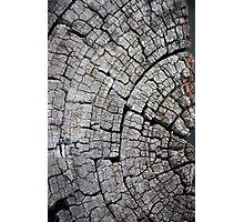 Old Log - Ipswich Photographic Print