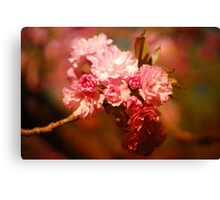 delicious blossoms Canvas Print