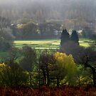 Morning Light - Richmond Park by lallymac