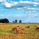 Horses in pasture. by JandeBeer
