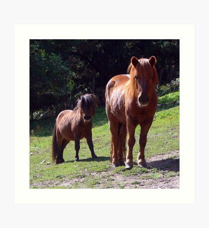 Shetland Ponies at historic Glen Harrow Art Print