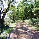 Country Road - South Purrumbete Vic. by EdsMum