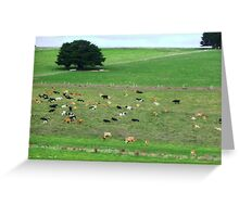 Dairy herd resting - South Purrumbete, Vic. Greeting Card