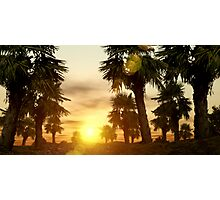 palm trees at sunset Photographic Print