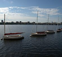 Sailboats on the Charles River by Christine Barry