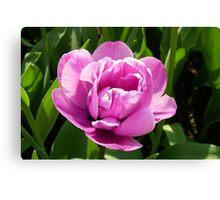 Vibrant Pink Tulip Canvas Print