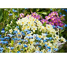 A Waiting Game: Primroses and Forget-me-nots Photographic Print