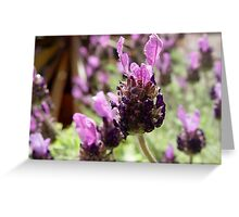 Fathead Lavender Greeting Card