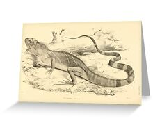 The Reptiles of British India by Albert C L G Gunther 1864 0509 Psysignathus Mentager Greeting Card