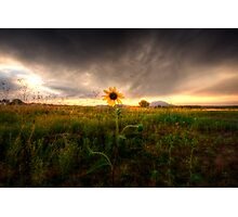 Sunflower Sunset Photographic Print
