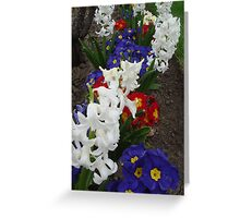 For Dad - Red, White & Blue Greeting Card