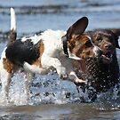 Dogs Have A Blast In The Sea by Moonlake