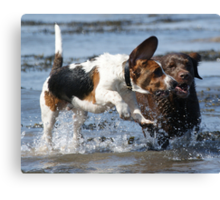 Dogs Have A Blast In The Sea Canvas Print