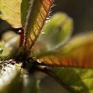 Macro Leaves by Sam Mortimer