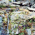 Kaaterskill Falls by John Schneider