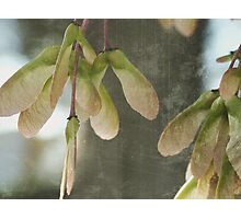 gossamer thoughts Photographic Print