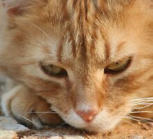 Orange Tabby Cat Sleeping on Ground by DebbieCHayes