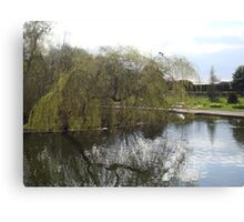 Weeping Reflections Canvas Print