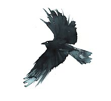 Crow Wings Photographic Print