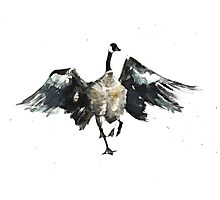 Slippy Goose Photographic Print