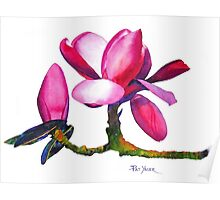 """Marwood Spring"" Magnolia Watercolor Poster"