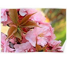 Ornamental cherry cluster Poster