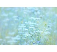 Field of Dreams... Photographic Print