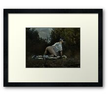 The Provider Framed Print