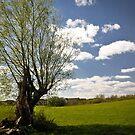 Lonely Tree by Lee Jones