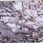fresh snow fall 50.00 by jlipton