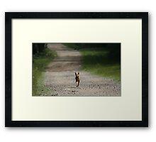 Trail Riding Dog  Framed Print