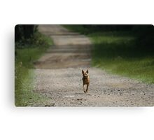Trail Riding Dog  Canvas Print