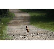 Trail Riding Dog  Photographic Print