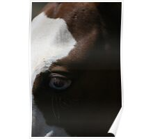 Horses eye - Blue eyes Poster