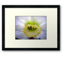 Daffodil Cup Framed Print