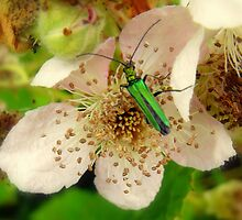 its a bugs life by larry flewers