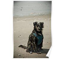 Lifes a Beach Poster