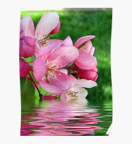 Spring Reflections Poster
